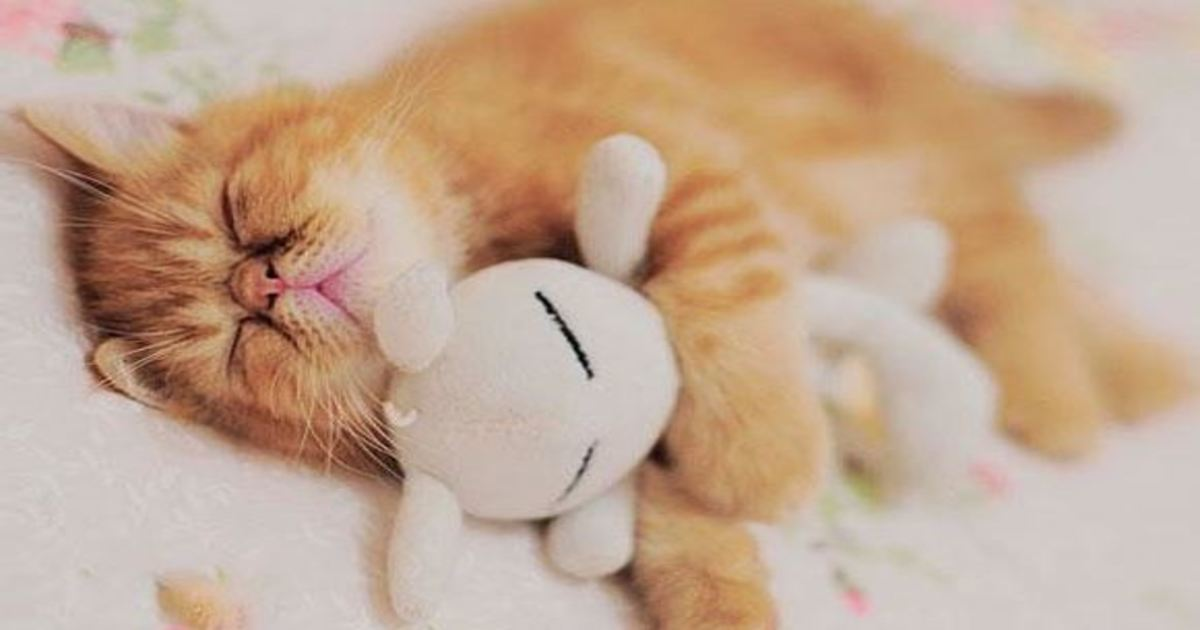 10 66.jpg - 25+ Animals With Their Favorite Stuffed Animal. Cuteness Overload!