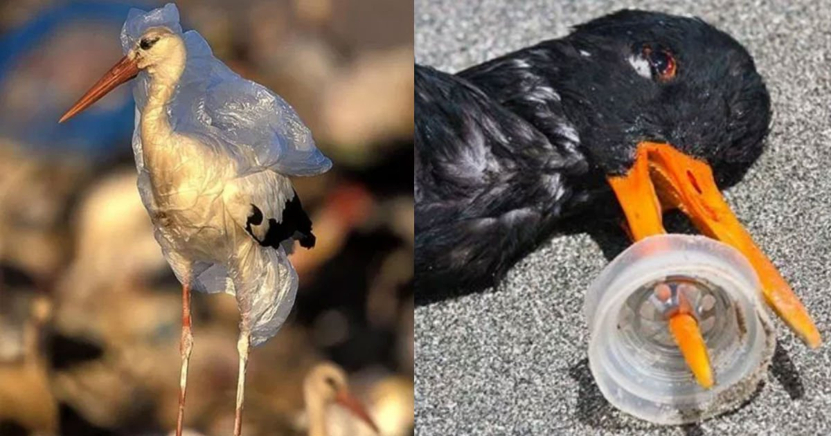 181115 301.jpg - 放過這些動物吧!人類到底還要把海洋汙染成什麼樣?讓人心痛的20張照片