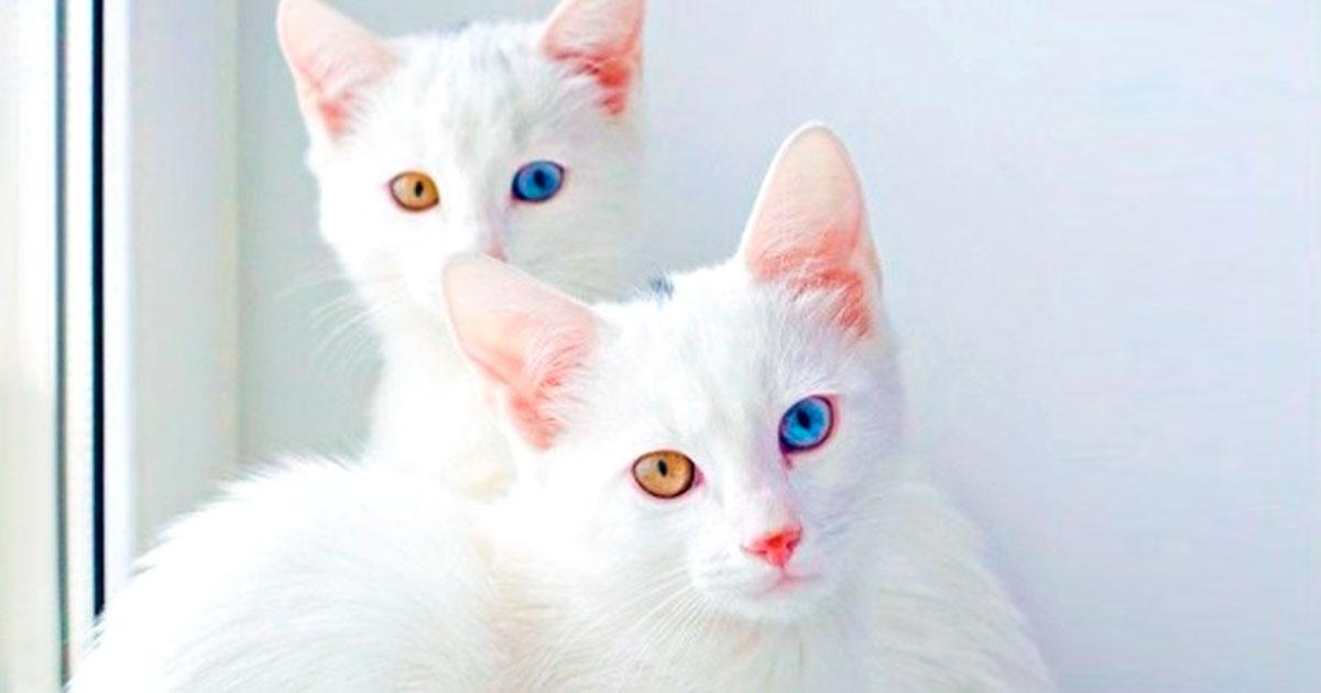 2 21.jpg - 19 Gatos fabulosos que cuestan una fortuna