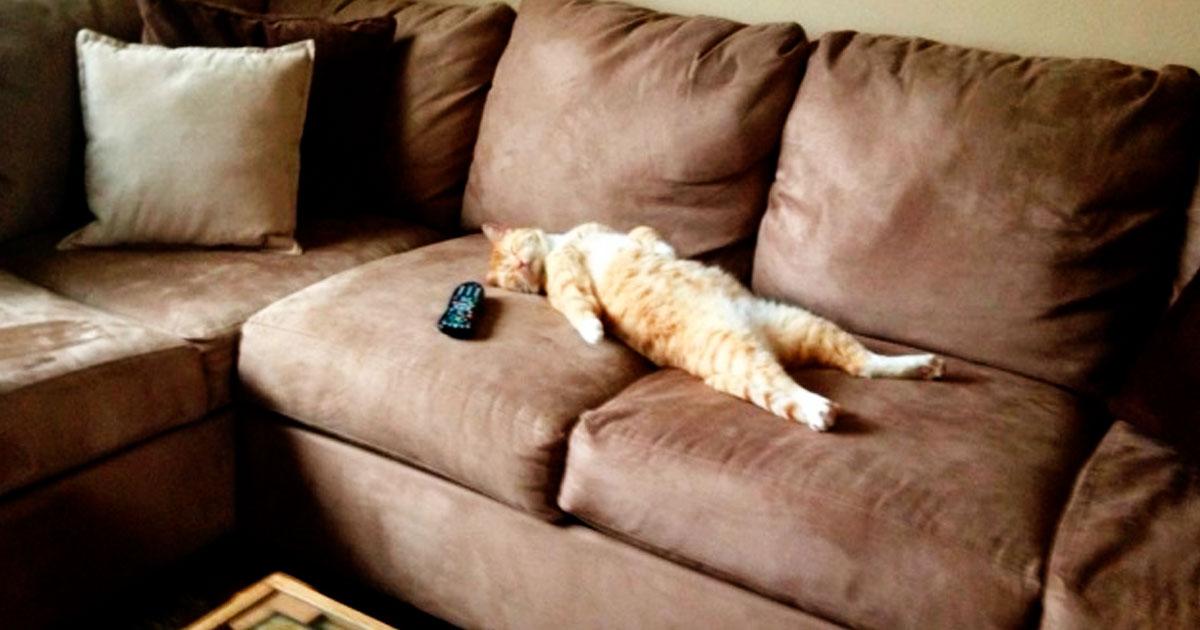 3 30.jpg - 27 Divertidos Snapchats con los que las personas con gato se sienten identificadas