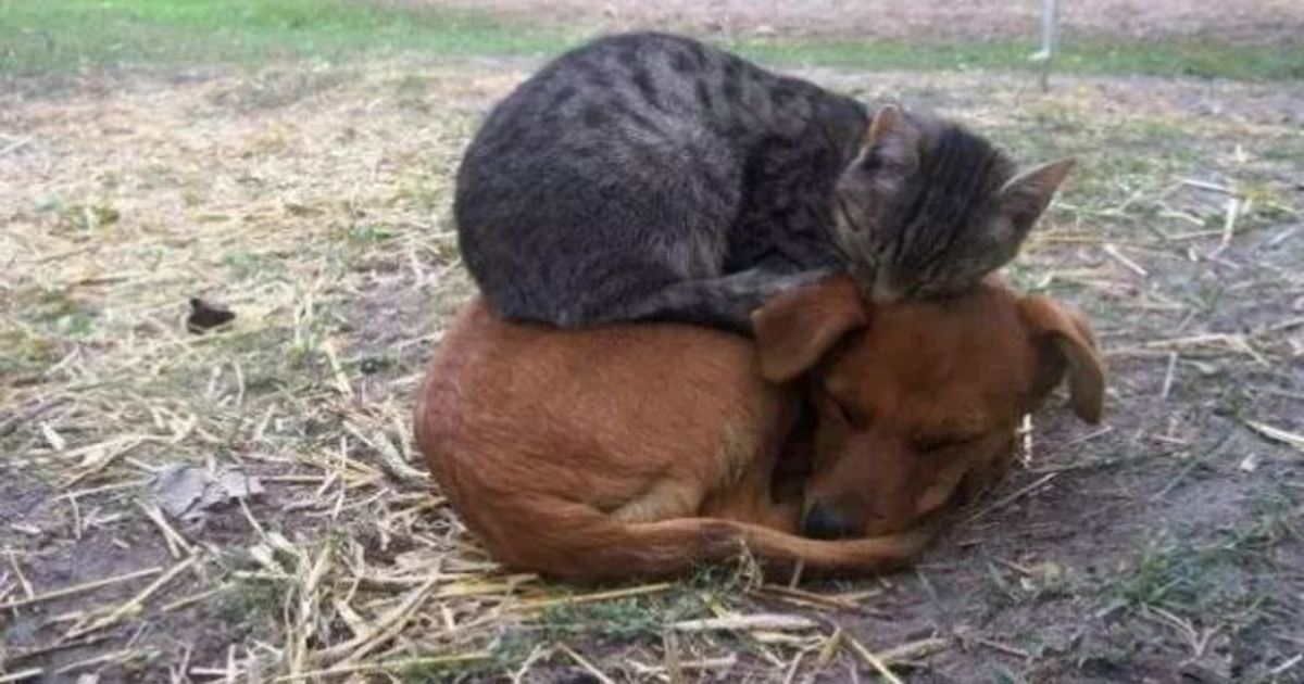 3 35.jpg - 20+ Adorable Dogs That Are Better than Pillows
