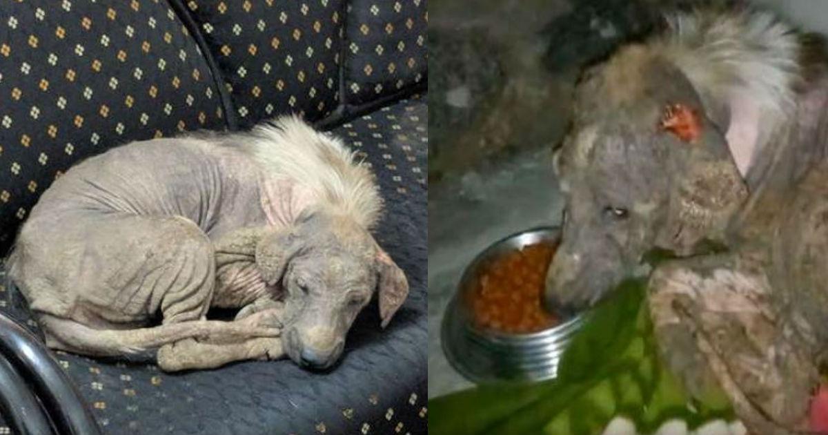 5 101.jpg - 毛が抜ける皮膚病に苦しみ、自ら動物保護センターへ訪ね「救助要請」した犬