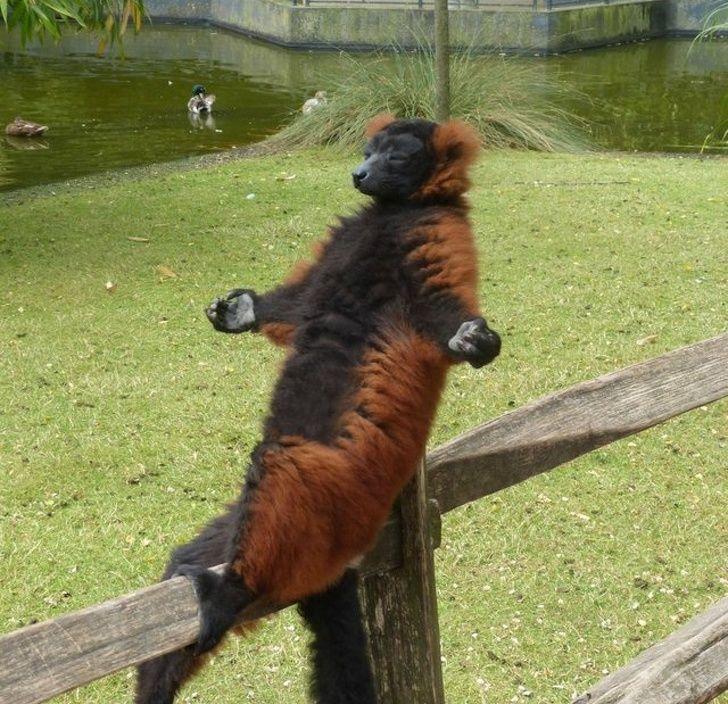 animaux bizarres droles 015.jpg - 20 photos prouvant que les animaux sont des êtres étranges