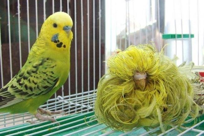 bird.jpg - 21 Imagens impactantes que merecem uma explicação