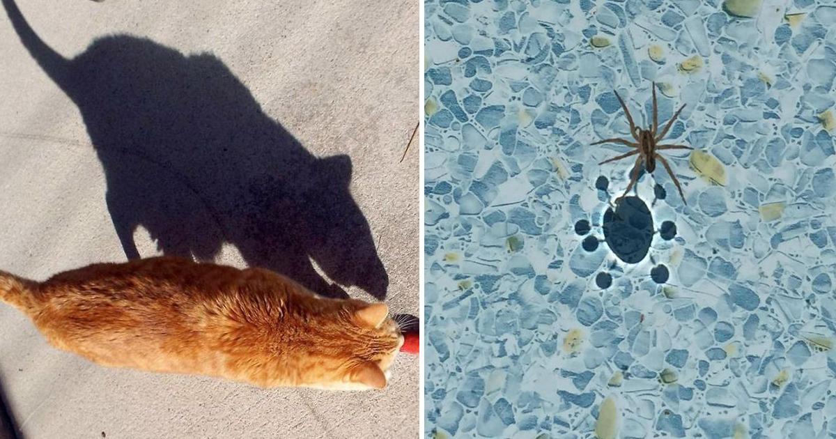 capa10.jpg - 22 Sombras curiosas que farão você olhar duas vezes