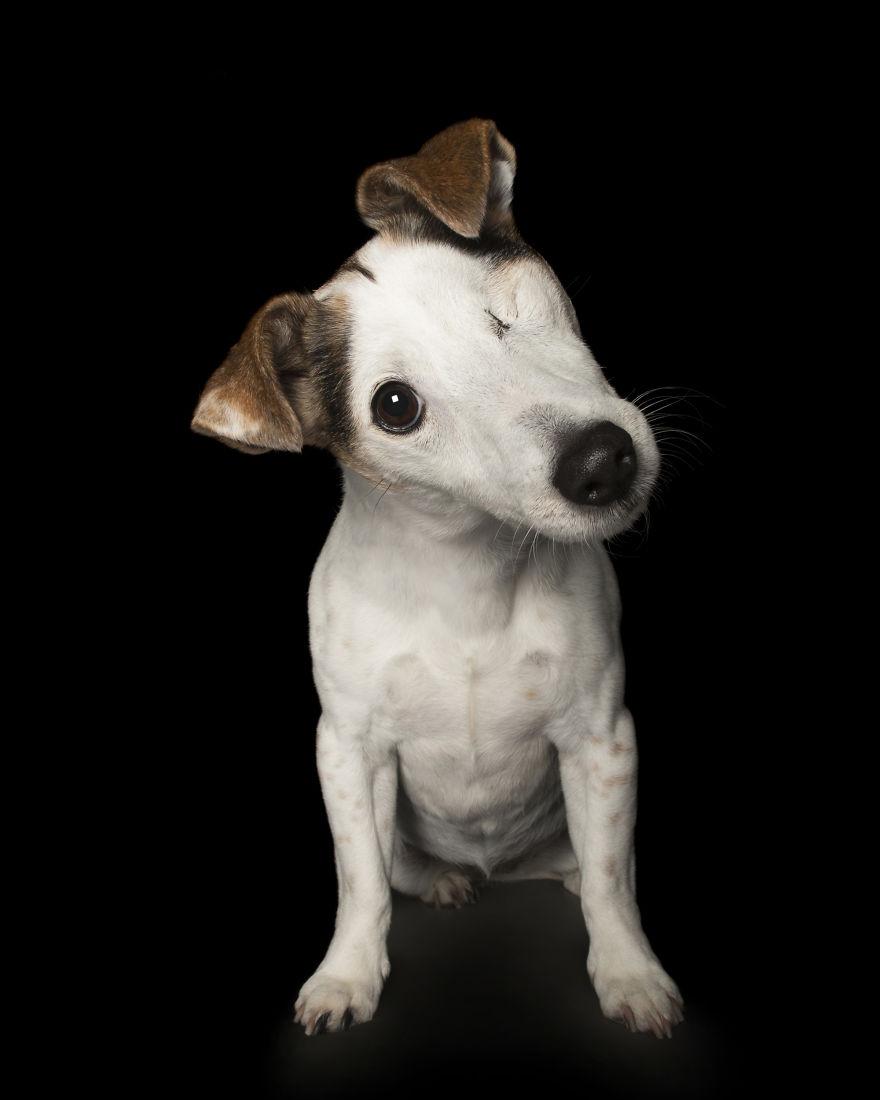"""chiens handicapes alex cearns 003.jpg - Ces animaux """"abimés"""" restent magnifiques sous l'œil de ce photographe"""