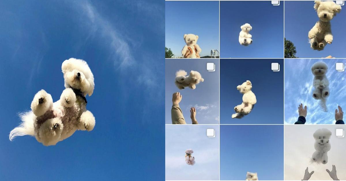 """e6849be78aac.jpg - 愛犬を飛ばせる写真に""""イイネ""""!?危ない「#空ショット」が流行!?"""