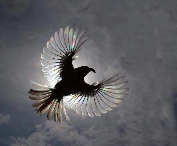 nature monde voyage 019.jpg - 22 superbes clichés qu'on ne doit qu'à la chance du photographe