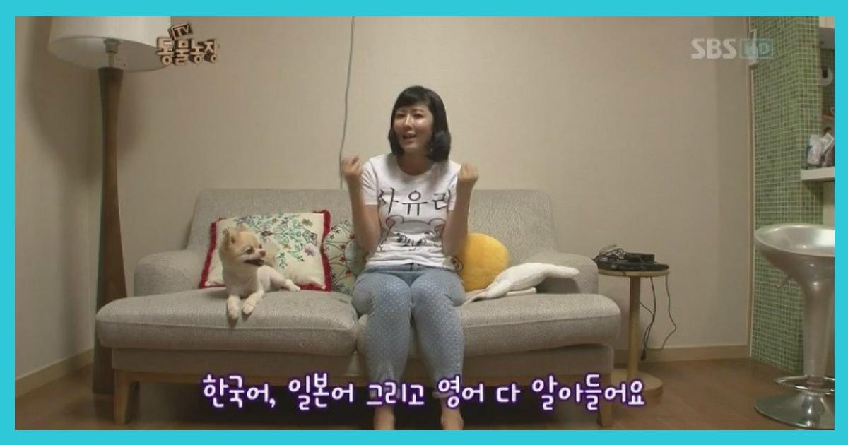 article thumbnail120602.png - '3개 국어'할 줄 안다는 사유리네 강아지의 비밀