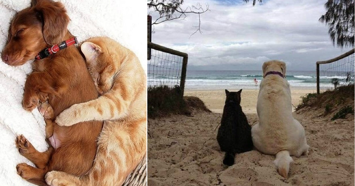 cats and dogs.jpg - 15+ Adorable Photos Of Cats Who Fell In Love With Dogs