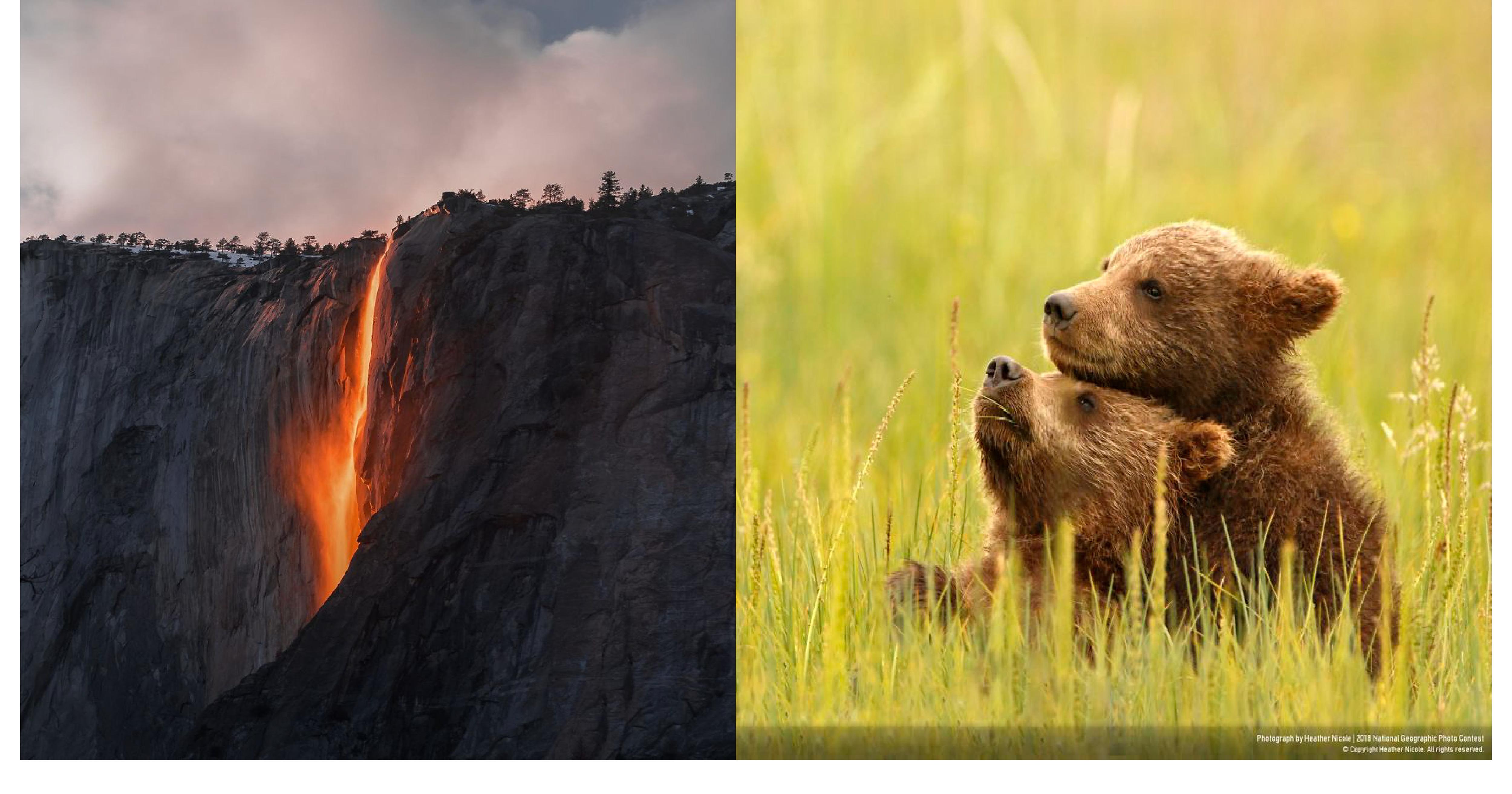 e5b081e99da2 e5b7a5e4bd9ce58d80e59f9f 1 3.png - 美到超不真實!15張獲「國家地理攝影獎」肯定的作品,網驚呼:「超震撼!」