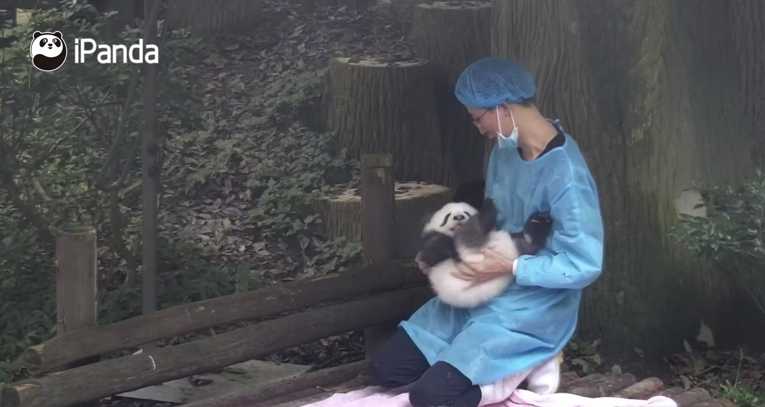 e89ea2e5b995e5bfabe785a7 2018 12 28 e4b88be58d882 55 47.png - 小笨熊貓想睡個午覺沒想到居然⋯⋯還好有奶爸前來救援