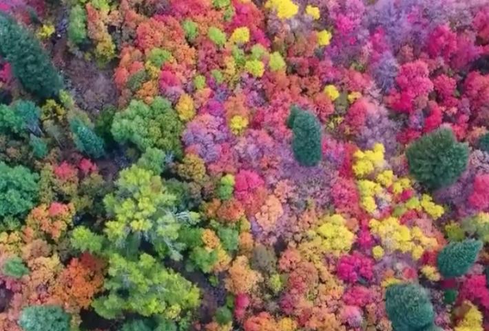 screen shot 2018 12 13 at 5 59 37 pm.png - 「原來大自然是這種色~」網友用空拍機拍下「超不真實」的森林美景