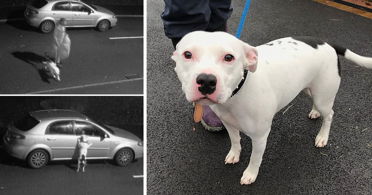 snoop the dog abandoned.jpg - Dog Who Was Abandoned By His Owner Days Before Christmas Appeared On TV Show