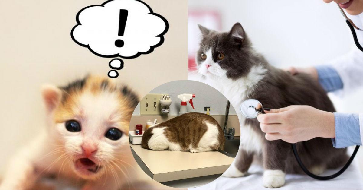 4 13.jpg - 【爆笑】自分が動物病院にいることに気づいた猫の行動が面白すぎる!!