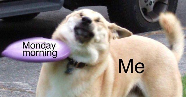 7e1e8ec57ae54885bbef916cb093a575 e1556255437620.jpg - 20 Dog Memes That Are Deeply Relatable