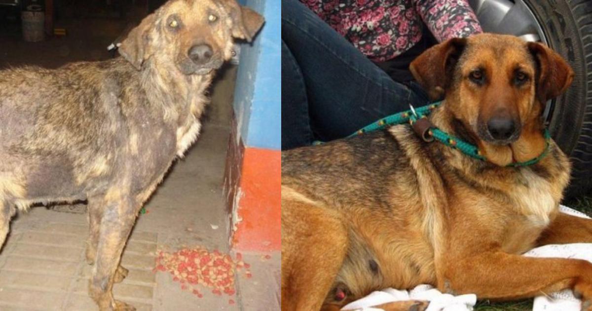 """efbc94 1.png - 保護された捨て犬たちの瞳に""""輝き""""が戻る瞬間…捨て犬ビフォア・アフター"""
