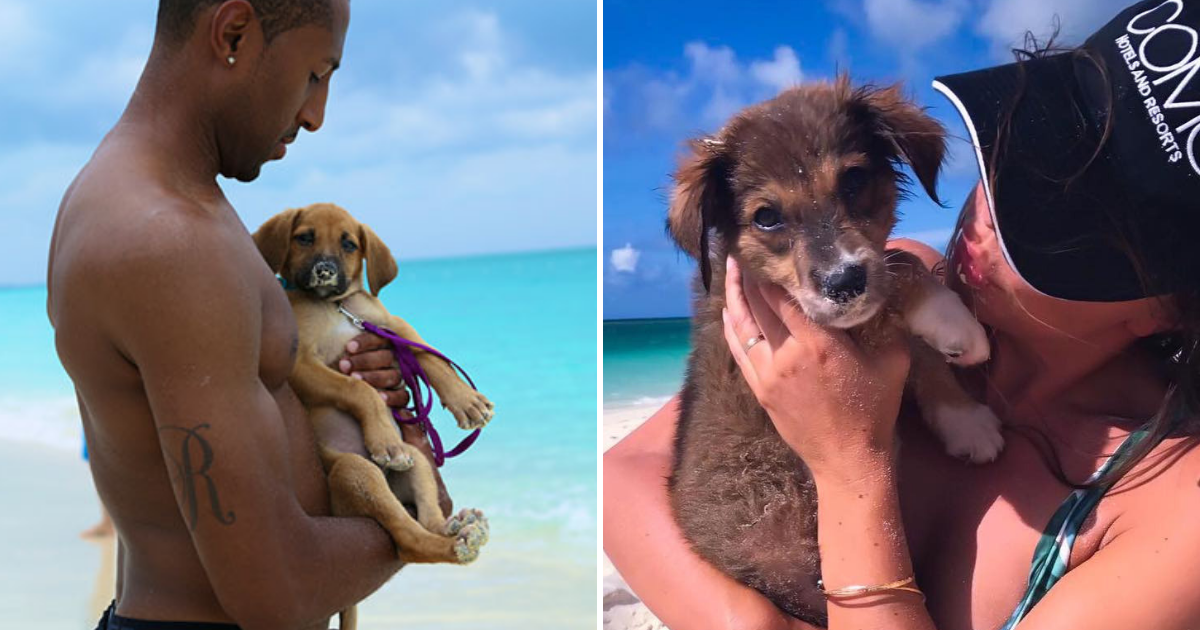 puppies.png - Tropical Island Is Full Of Cute Rescue Puppies That Tourists Can Play With Or Adopt