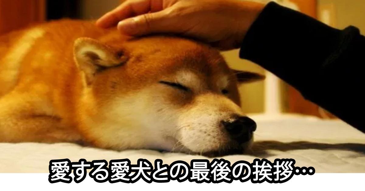 saigono.jpg - 写真作家も涙した…愛犬と家族の「最後の挨拶」