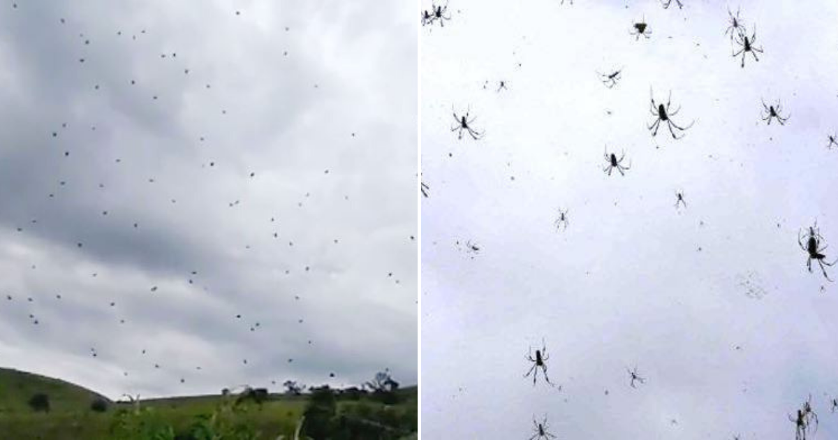 spiders5.png - Des milliers d'araignées tombent du ciel, forçant les habitants effrayés à se mettre à l'abri
