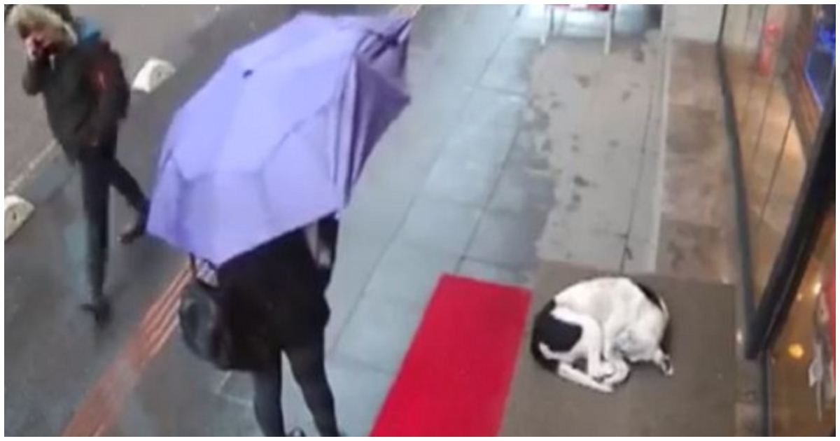 stray.jpg - CCTV Captures A Woman's Act Of Kindness To A Shivering Stray Dog & It Goes Viral