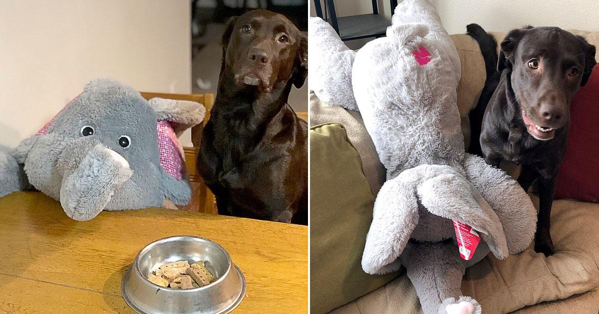 vid o d 39 une chienne emmenant son jouet pr f r et meilleur ami pour aller faire du shopping car. Black Bedroom Furniture Sets. Home Design Ideas