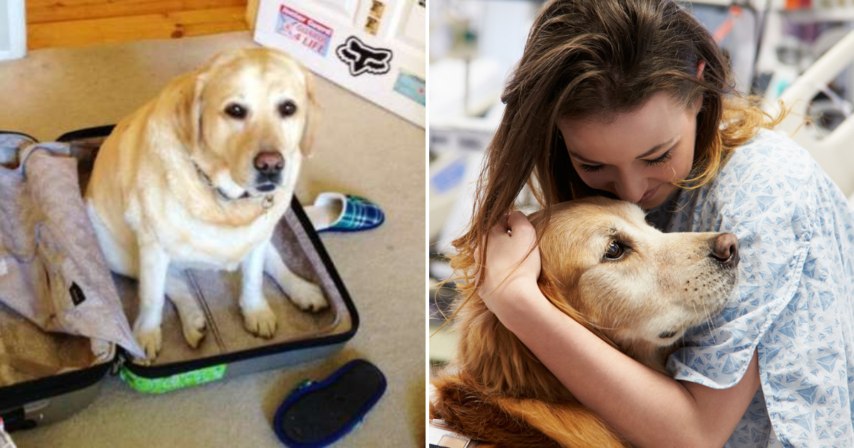 dogo.png - Husband Revealed How He Snuck Family Dog Into Hospital So She Could Say Goodbye To Wife