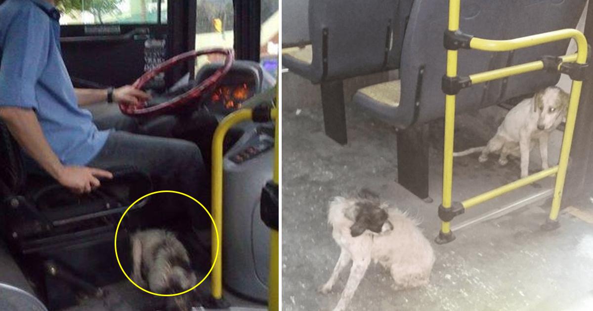 gaasdag.jpg - Un chauffeur de bus enfreint la règle de sa compagnie pour venir en aide à des chiens errants