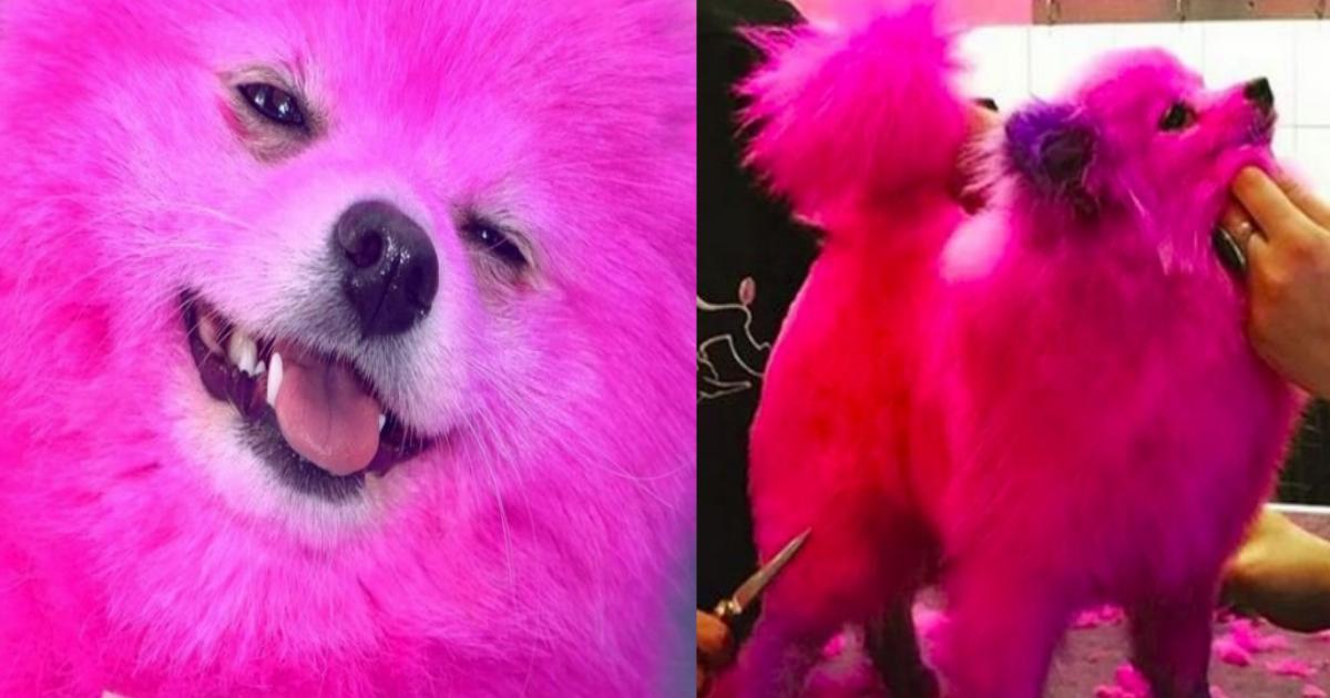 pink.png - 愛犬の毛をピンクに染めたモデルが大炎上!「2ヶ月に1回は染めてます」