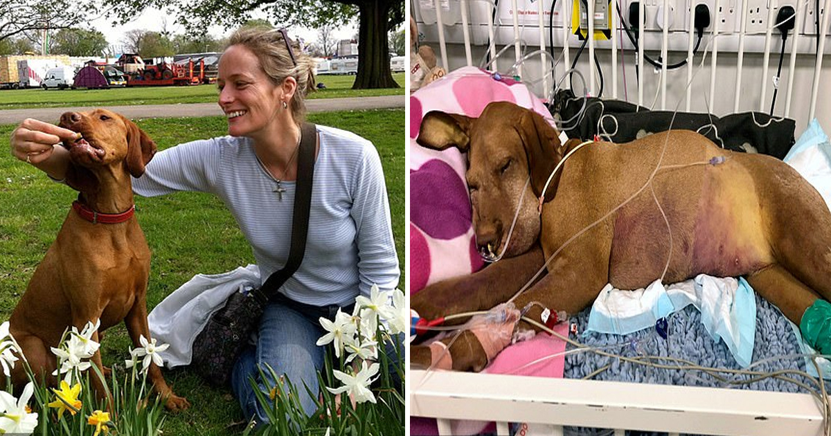 vvvvvv.jpg - Woman Warned Pet Owners After Her Dog Passed Away Five Days After Eating Chocolate Brownies