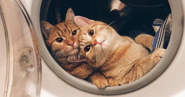 498560 ncc8h0stnoztvgnpwbxm51vsh ne5ldrgmsre0ezb 8 1526296364 728 0306414a55 1526323099 1 e1552376340477.jpg - 21 Times Cats Had Us Grinning From Ear to Ear