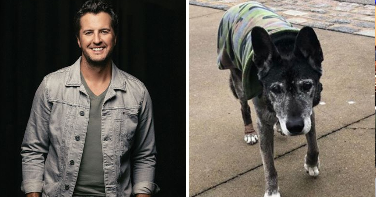 bbb.jpg - Luke Bryan Gives Shelter To 18-year-old Dog Surrendered for Causing Allergies