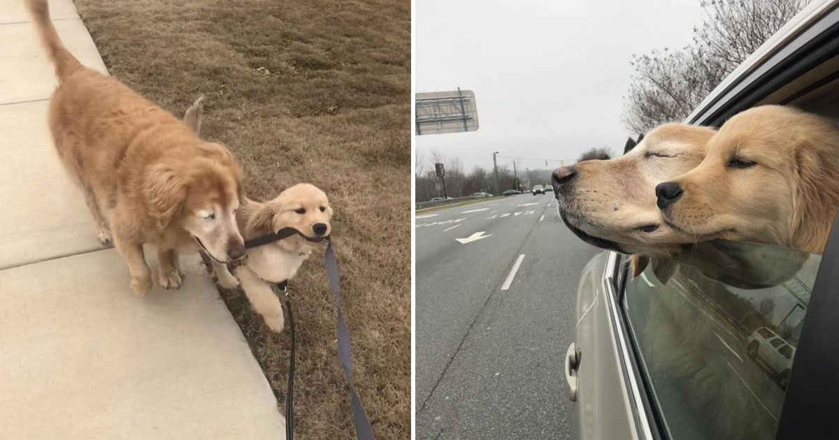 blind dog.jpg - 4-Months-Old Dog Uses A Leash To Guide His New Friend Who Is Now Completely Blind