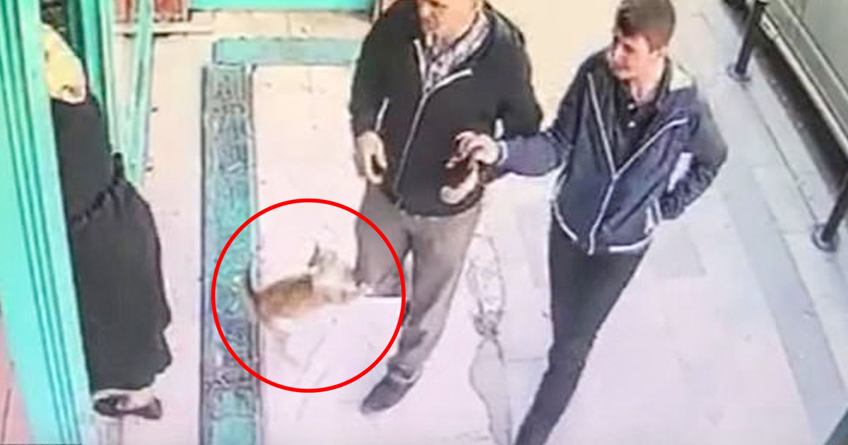 cat attacks men dogs.jpg - Stray Cat Pounces Only Men And Dogs Outside An Market