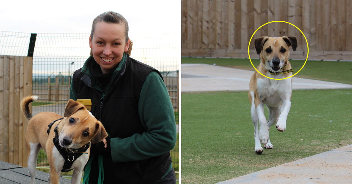 dfd.jpg - Four-year Dog Suddenly Went Blind - Animal Trust Is Still Looking For 'Guide Humans' To Adopt Him