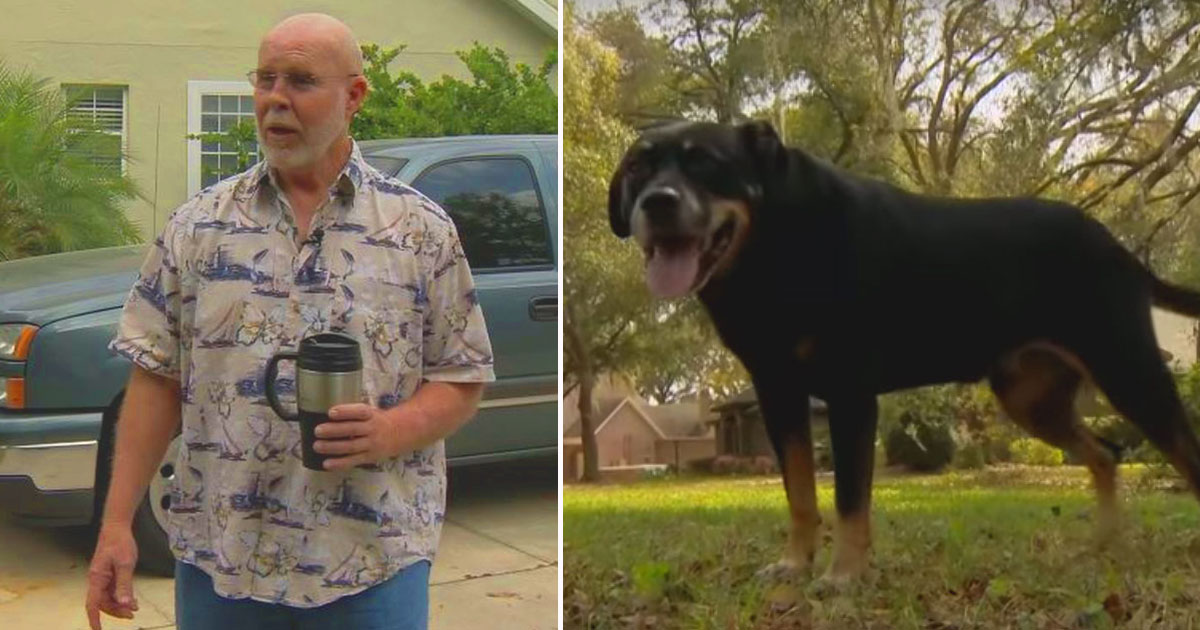 dog coyote attack.jpg - Dog Owner Saves His Dog From A Coyote Using A Coffee Cup