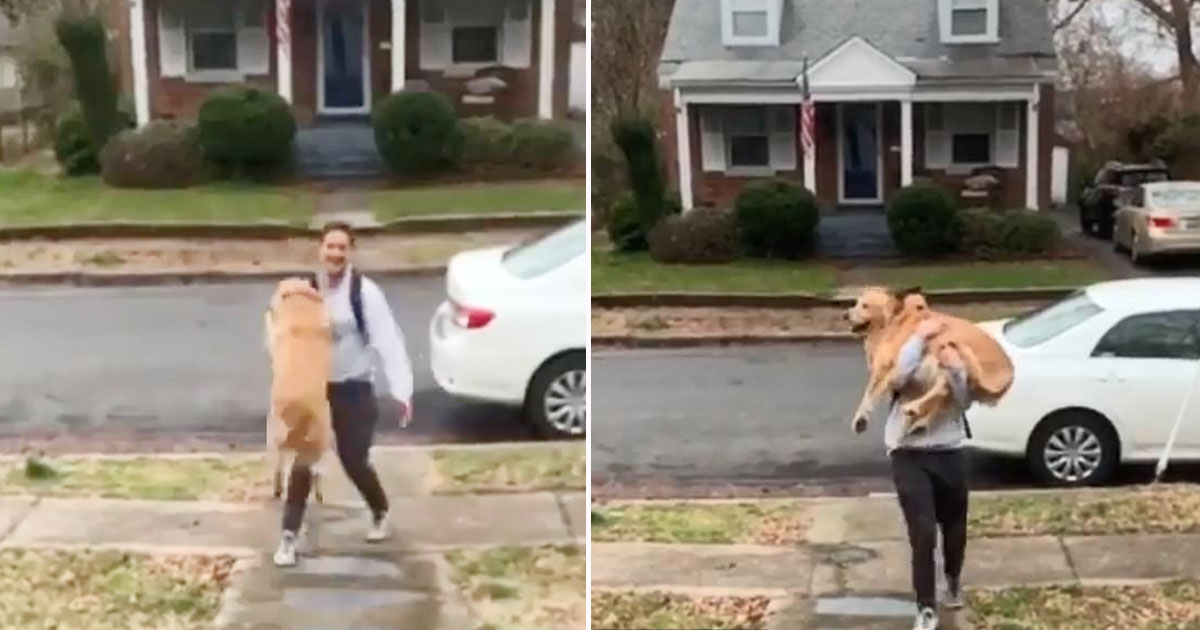 dog owner.jpg - Adorable Dog Couldn't Contain His Excitement Seeing His Owner Who Came Back Home From Work