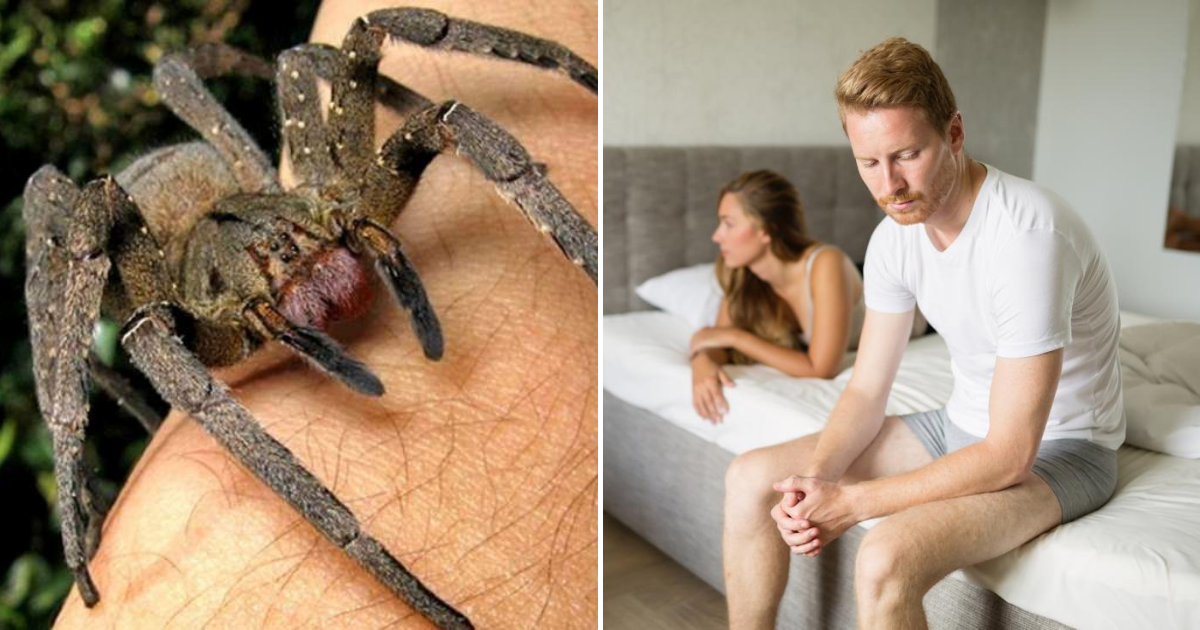 spider3.png - Spider Venom Could Be Way Better Than Viagra For Treating Erectile Dysfunction