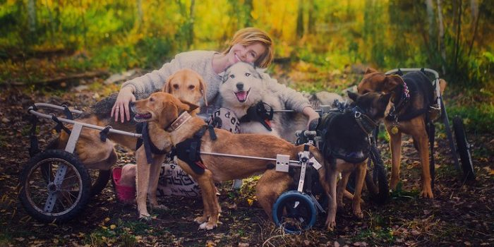 17 5c66b5d508f33  700 e1556256013284.jpg - 100 Sick Dogs Finds New Life With The Care Of A Famous Russian Photographer