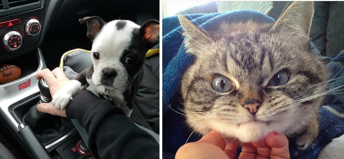 4069160 image crop 640x559 1534160102 728 f85ae5f054 1534311562 1.jpg - 23 Fotos que retratan los extraños hábitos de perros y gatos que para ellos son de lo más normal