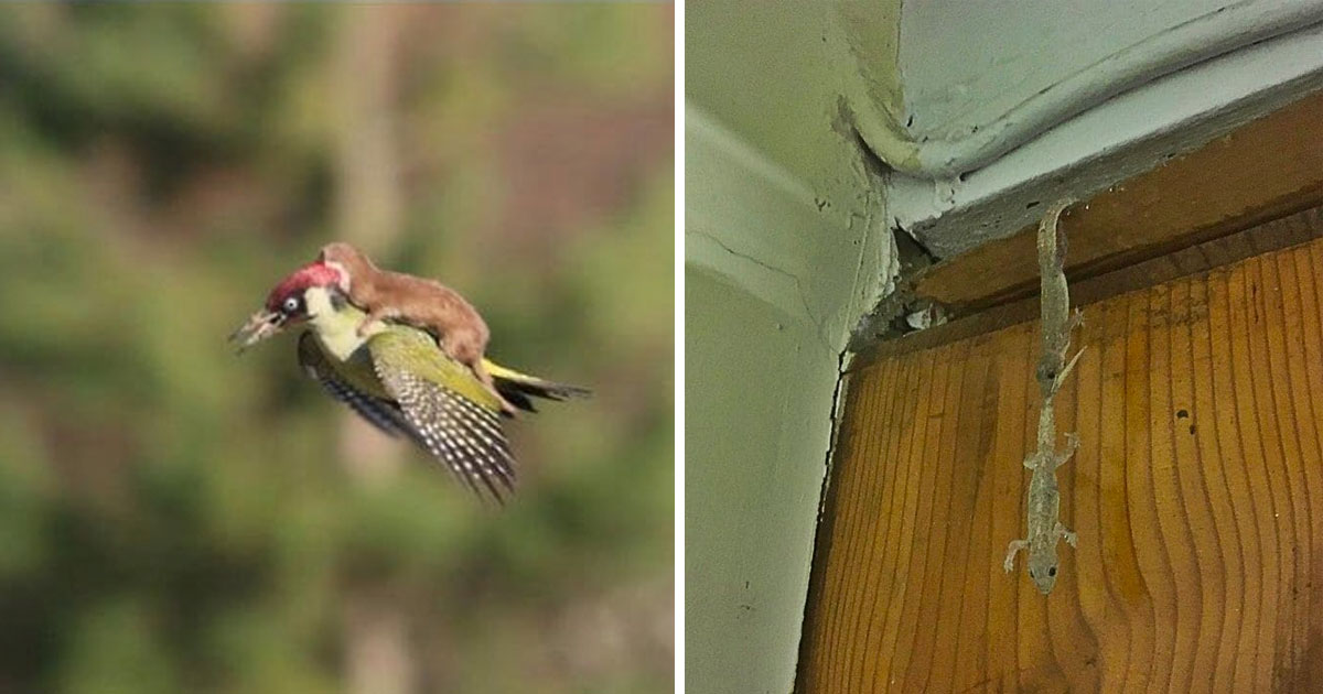 animals saving each other.jpg - 15+ Hilarious Animals Saving Each Other In The Best Ways Possible