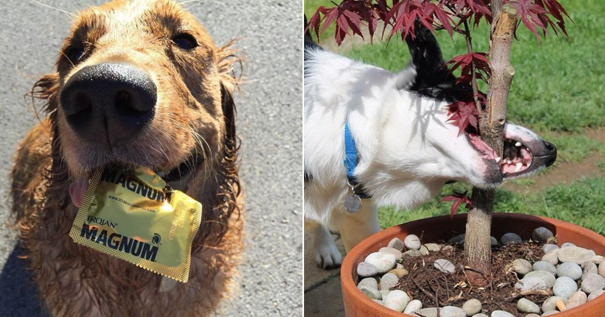 brought back wrong.png - 15+ Dogs Who Brought Back The Wrong Things While Playing Fetch