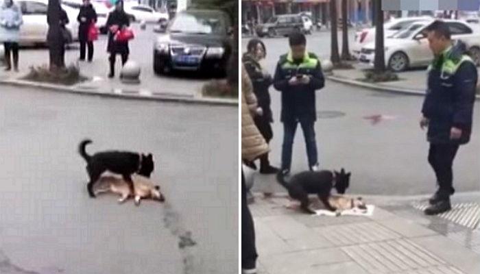 bs6lel7acxw2hq62ayt3.jpg - 「車にひかれた」友達を生かそうと苦しみもがく犬たち