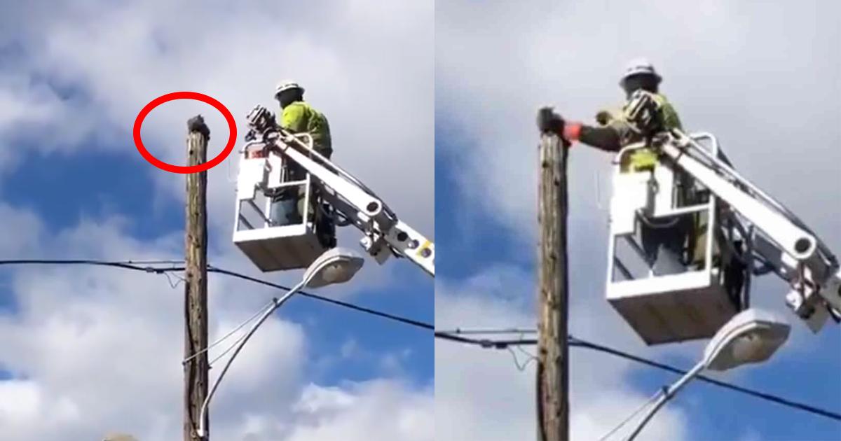 catonpole.jpg - 電柱から降りられない猫を助けた男性作業員に◯◯処分…その処分に対し抗議の声をあげる人々