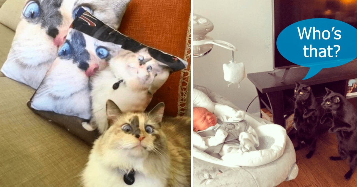 cats are just cats.jpg - 40+ Times Where Cats Were Being Hilarious While Just Being Themselves