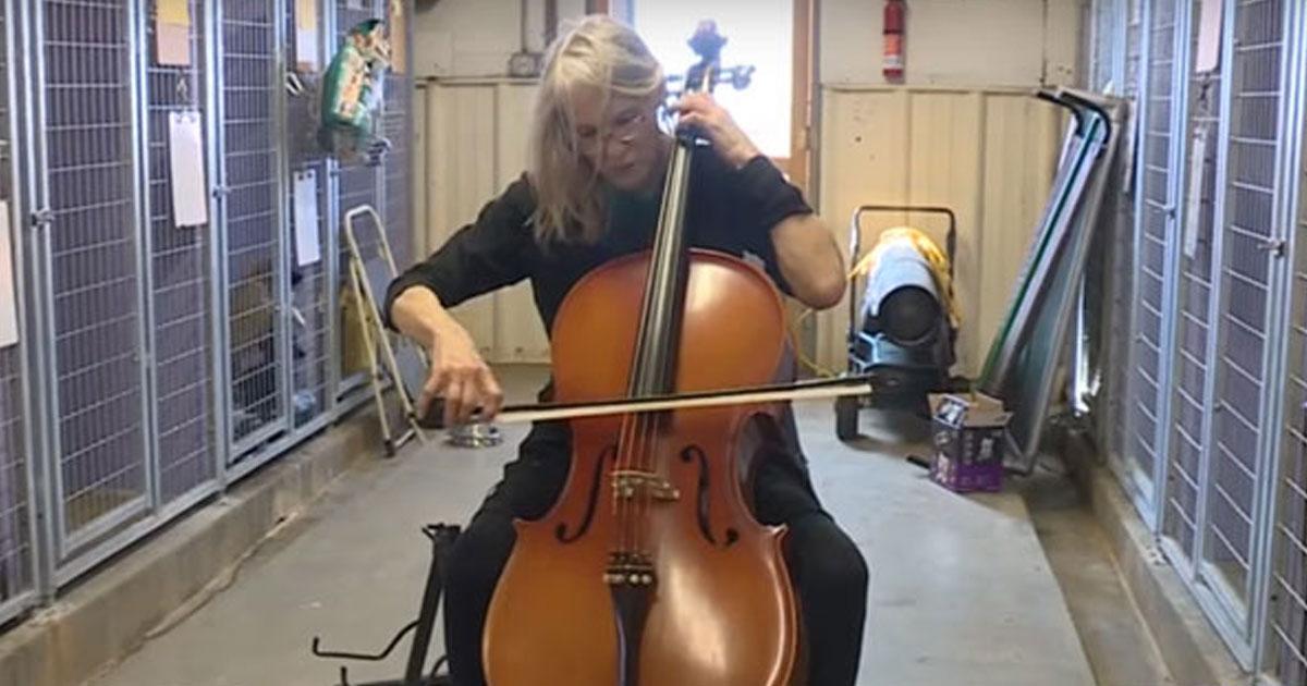 cello 4 dogs.jpg - Cette femme joue du violoncelle dans un refuge pour apaiser les chiens anxieux