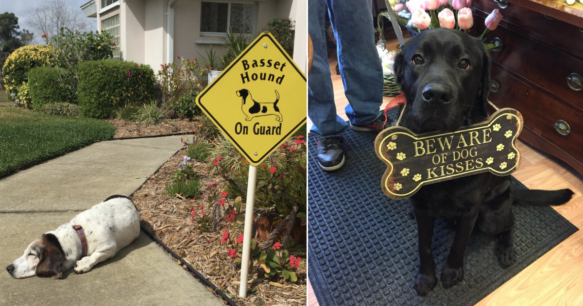 guard dogs.png - 15 Guard Dogs Who Are Terrible At Their Jobs