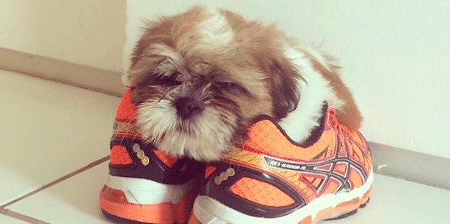 screen shot 2018 06 05 at 10 07 06 am e1556438215567.png - 25 Puppies Who Feels Most At Home In Shoes