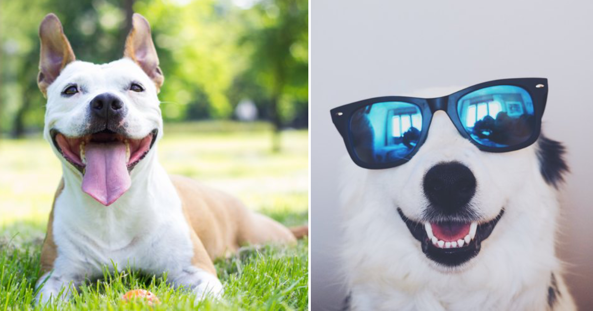 smiling dogs.png - 25+ Smiling Dogs That You Will Instantly Fall In Love With