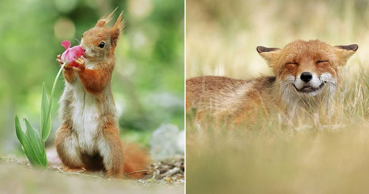 wildlife photos.jpg - 40+ Adorably Playful Wildlife Photos By Photographer Julian Rad